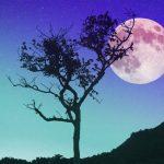 太陽星座と月星座の調べ方や違いをわかりやすく解説!