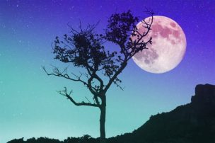 太陽星座と月星座で性格を占う